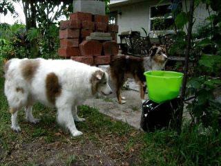 Lanzador- de -pelotas- automaticos- para -perros-obesos