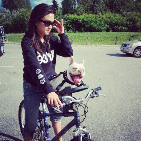 silla- de- bici -para- perro -encantado