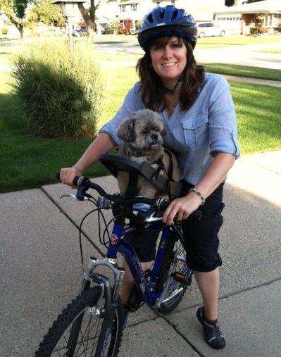 silla- de- bici -para- perro -gris