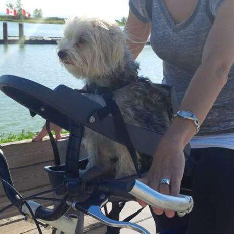 silla- de- bici -para- perro – maltes