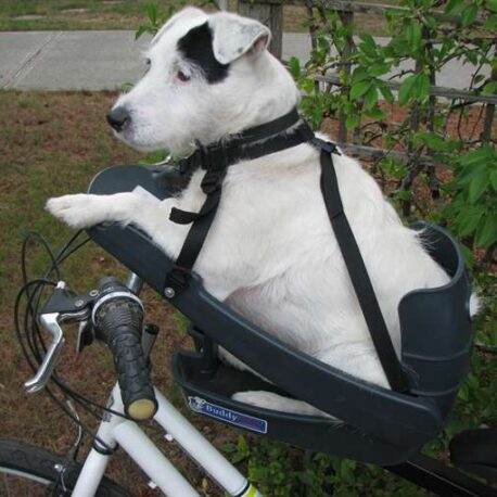 silla- de- bici -para- perro – mayor