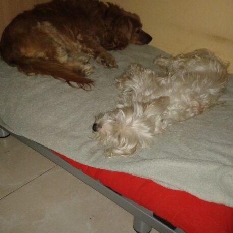 Somier para perros05