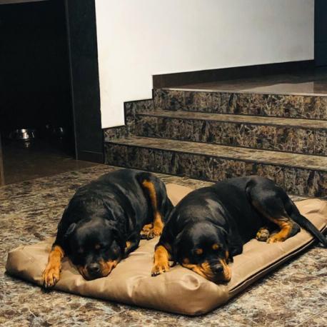 colchon marron perros3.jpg