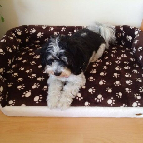 cama perro05